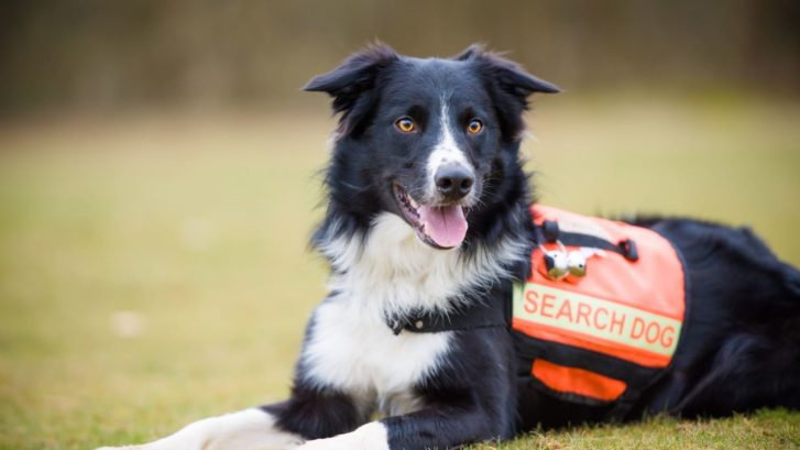Search dogs being trained to hunt down dementia patients who go missing